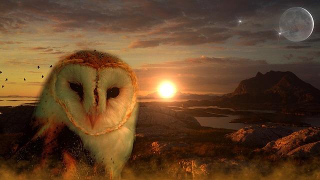 owl-711601_640